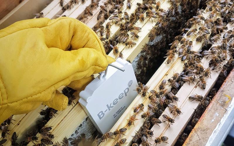 Grazie all'apicoltura collegata.