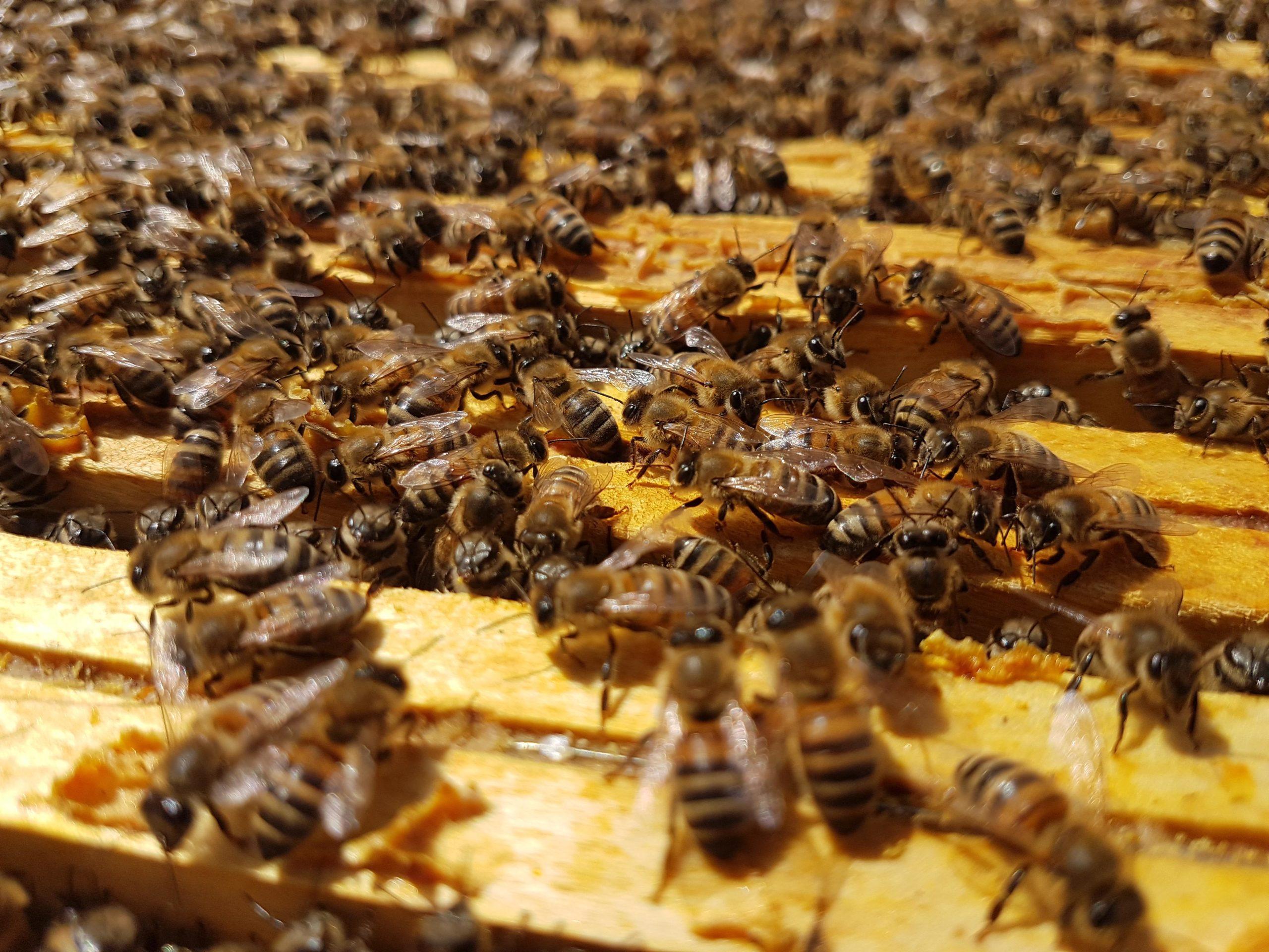 Salviamo le api.